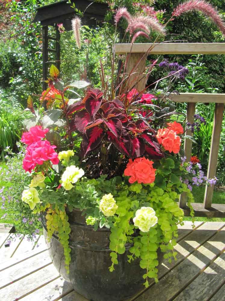 Summer Container Contest Winner Squak Mt Greenhouses