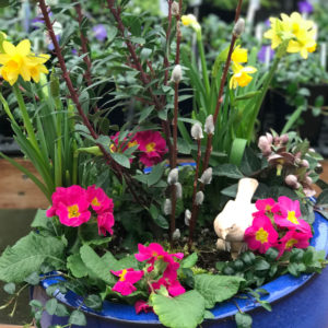 Container Gardening Do's & Don't's