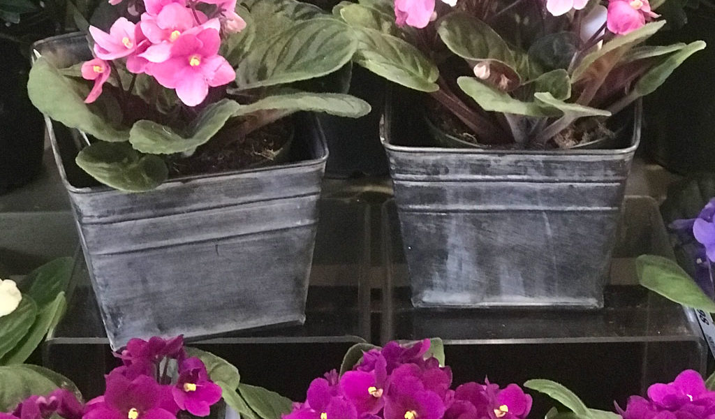 Make it Cozy with Houseplants