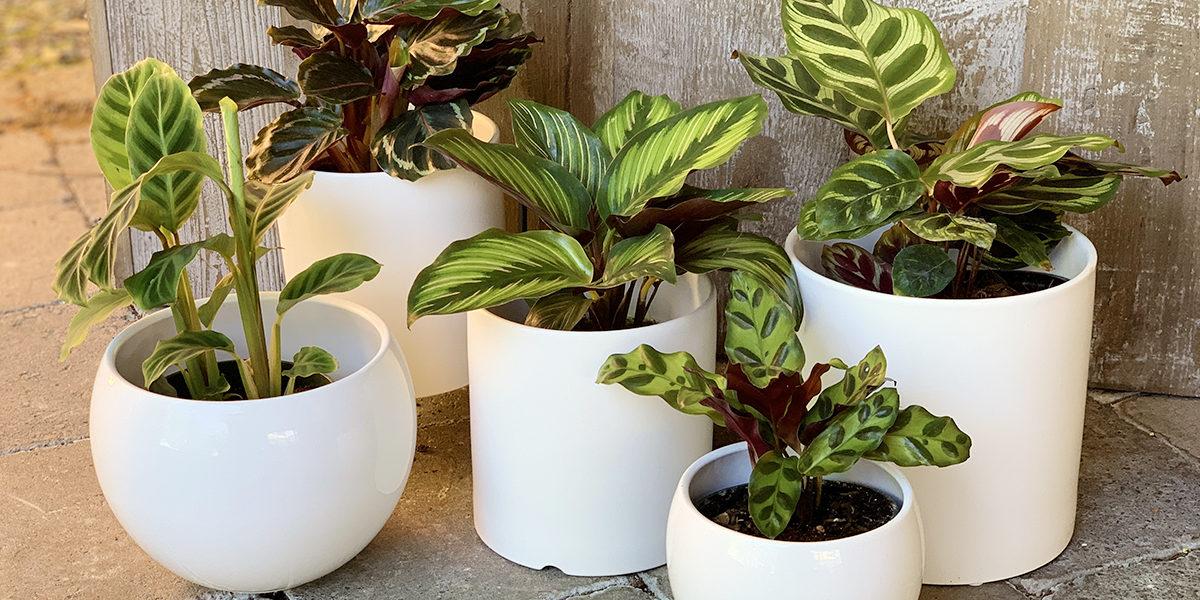 Abundance of Houseplants