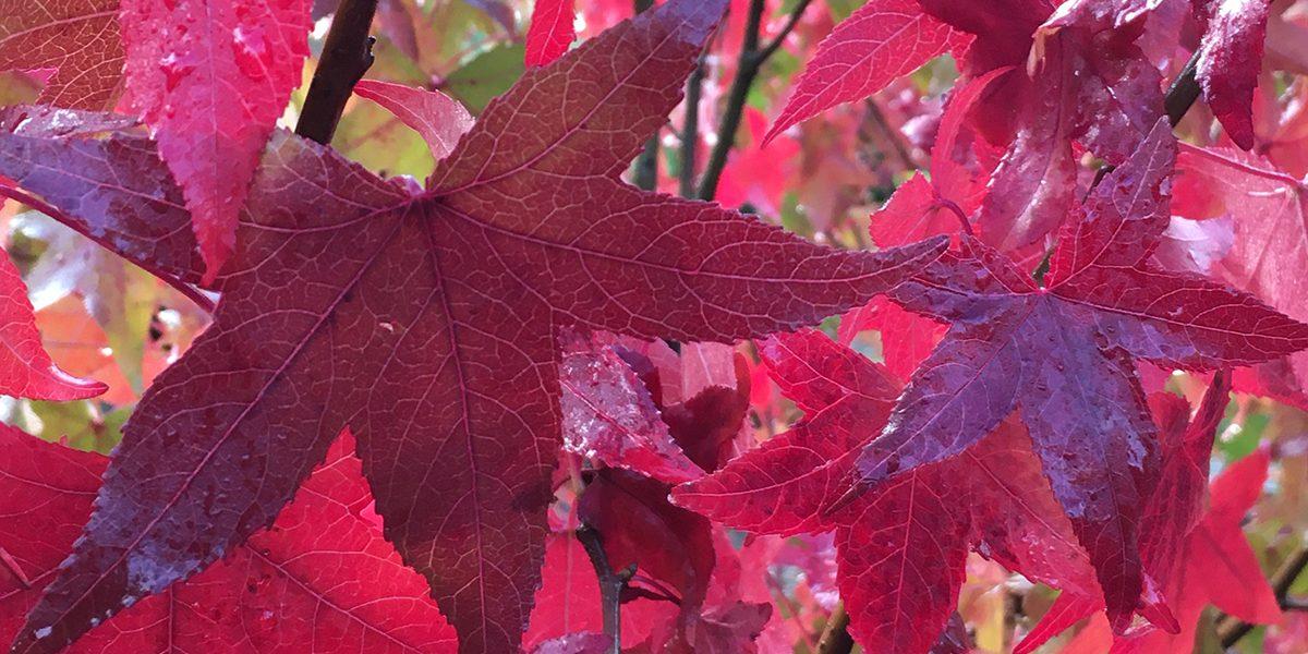 Fall Color at Squak Mt.